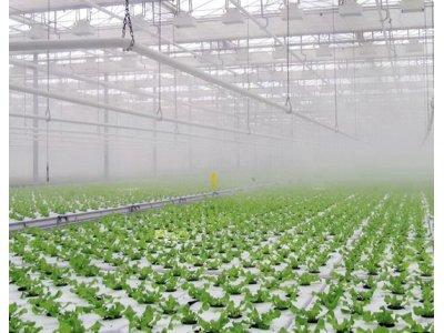 Полив туманом – сферы и особенности применения