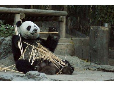 Парки развлечений, зоопарки